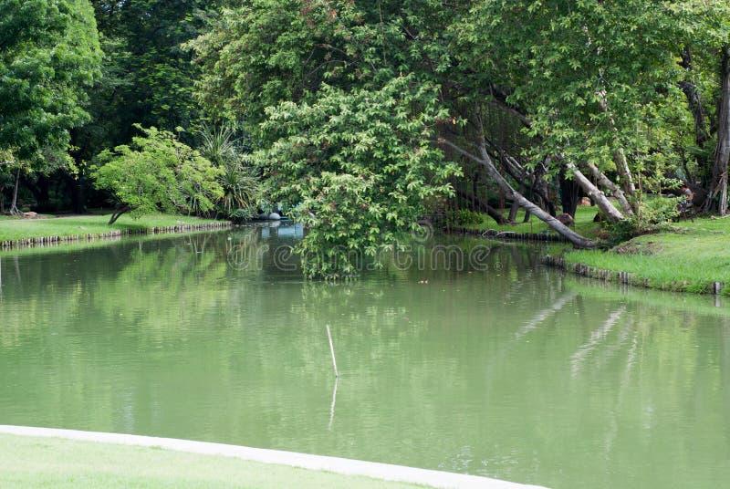 Η λίμνη περιβάλλεται από τα πάρκα Τα μεγάλα δέντρα που περιβάλλονται με στοκ φωτογραφίες με δικαίωμα ελεύθερης χρήσης