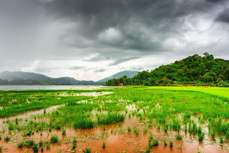 Η λίμνη LAK και ο πράσινος τομέας ρυζιού, επαρχία LAK Dak, Βιετνάμ στοκ εικόνα με δικαίωμα ελεύθερης χρήσης