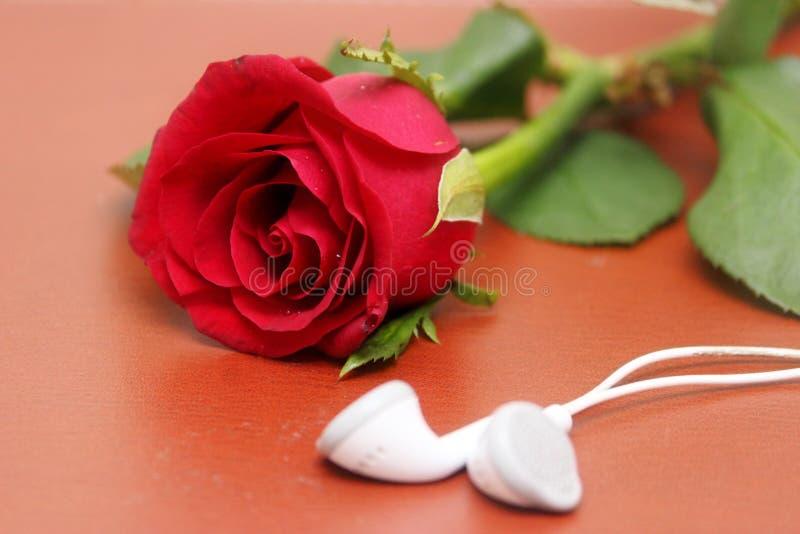 Η αγάπη, αυξήθηκε, ρομαντική έννοια μουσικής στοκ εικόνα με δικαίωμα ελεύθερης χρήσης