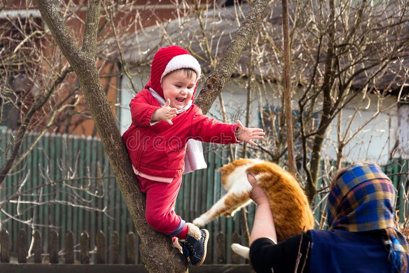 Η αγροτική γιαγιά δίνει στα χέρια μιας γάτας ένα παιδί που αναρριχήθηκε σε ένα δέντρο στοκ φωτογραφία με δικαίωμα ελεύθερης χρήσης