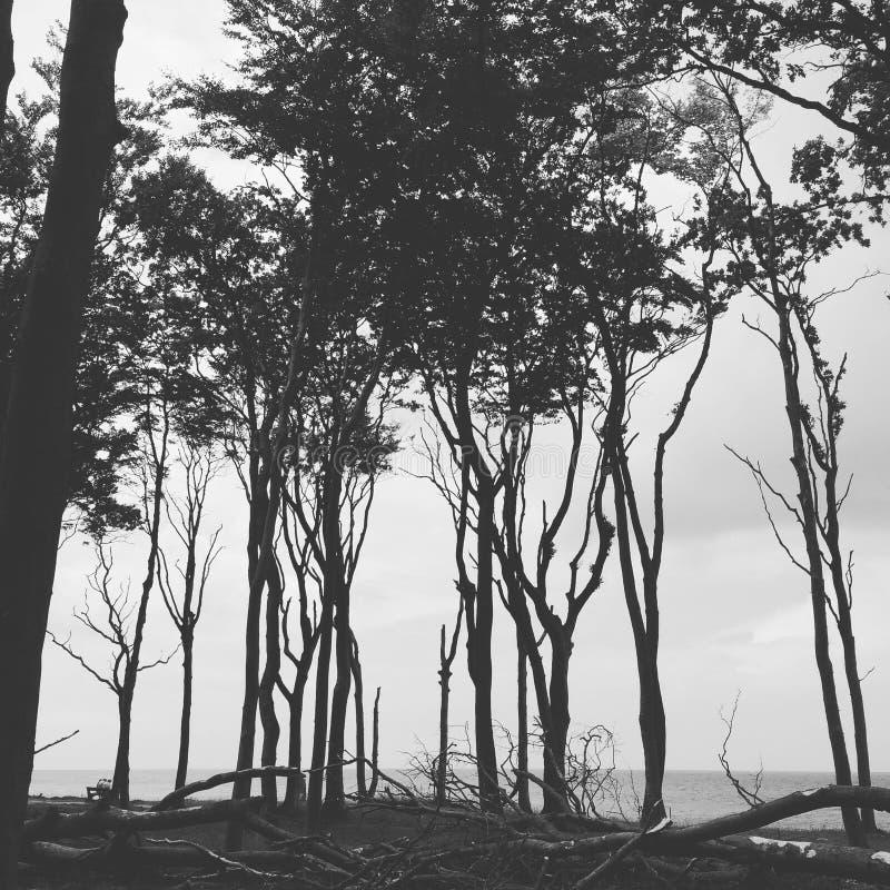 Η ακτή με τα δέντρα στοκ φωτογραφίες