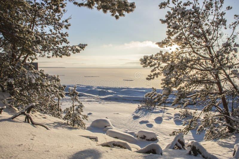 Η ακτή της θάλασσας της Βαλτικής στοκ εικόνες με δικαίωμα ελεύθερης χρήσης