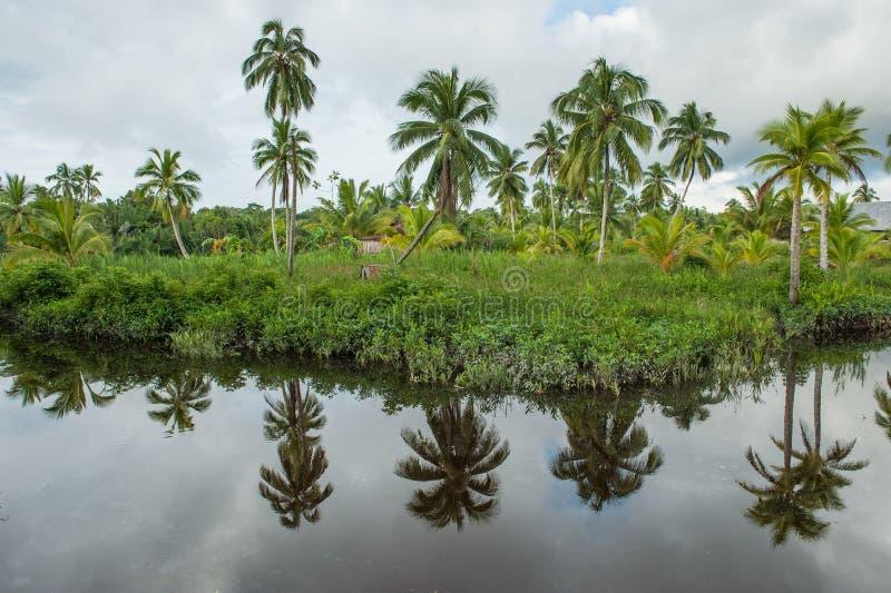 Η ακτή του άγριου ποταμού στη ζούγκλα - η χαρακτηριστική θέση για την τακτοποίηση των φυλών Asmat Νέα Γουϊνέα Ινδονησία Asmat στοκ εικόνες με δικαίωμα ελεύθερης χρήσης