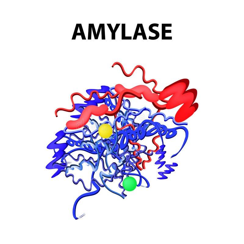 Η αμυλάση είναι ένας μοριακός χημικός τύπος Ένζυμο του πάγκρεατος Infographics Διανυσματική απεικόνιση στο απομονωμένο υπόβαθρο διανυσματική απεικόνιση
