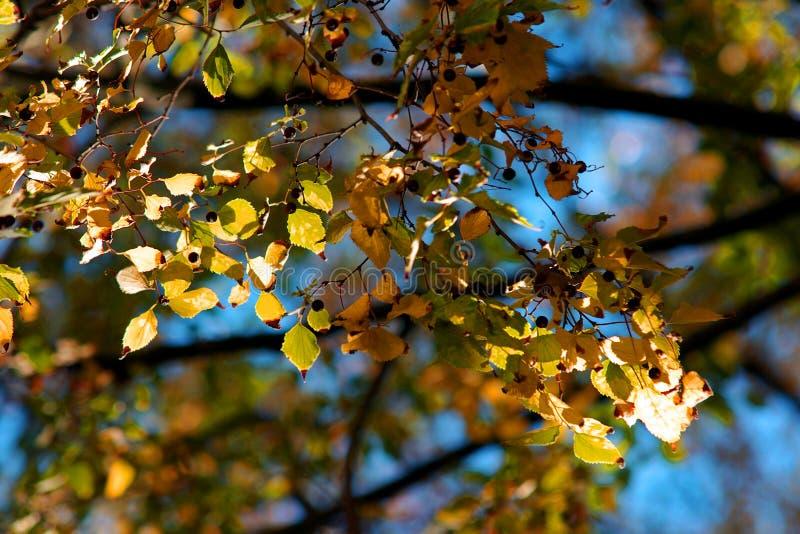 η ανασκόπηση βγάζει φύλλα στοκ εικόνα
