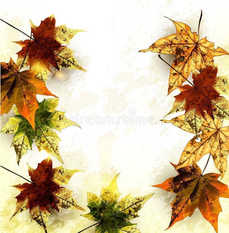 Η ανασκόπηση φθινοπώρου grunge με το mapple βγάζει φύλλα απεικόνιση αποθεμάτων
