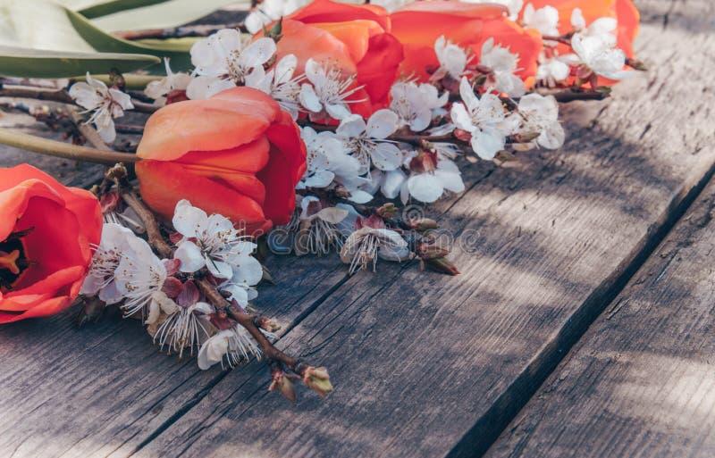 Η ανθοδέσμη με το άσπρο βερίκοκο ανθίζει και κόκκινες τουλίπες στο υπόβαθρο των παλαιών, ξύλινων πινάκων r στοκ φωτογραφία