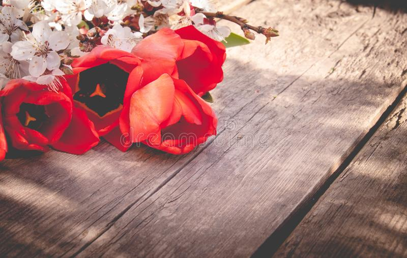 Η ανθοδέσμη με το άσπρο βερίκοκο ανθίζει και κόκκινες τουλίπες στο υπόβαθρο των παλαιών, ξύλινων πινάκων r στοκ εικόνα με δικαίωμα ελεύθερης χρήσης