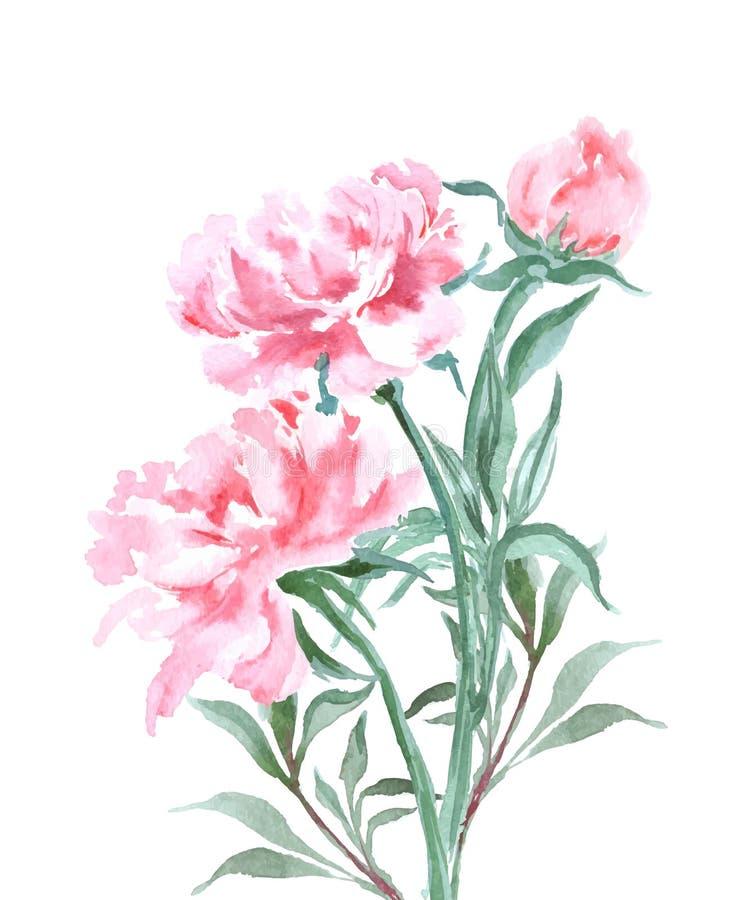 Η ανθοδέσμη των peonies, watercolor, μπορεί να χρησιμοποιηθεί ως ευχετήρια κάρτα, κάρτα πρόσκλησης για το γάμο, διάνυσμα γενεθλίω διανυσματική απεικόνιση