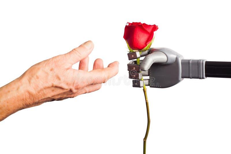Η ανθρώπινη λήψη χεριών αυξήθηκε από το τεχνητό χέρι στοκ φωτογραφίες με δικαίωμα ελεύθερης χρήσης