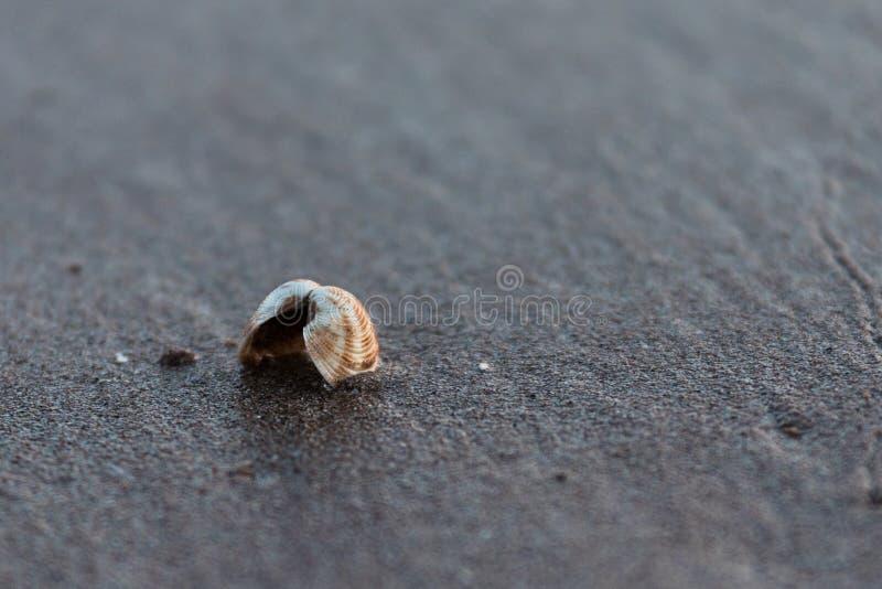 Η ανοικτή Shell σε μια αμμώδη παραλία στοκ εικόνες με δικαίωμα ελεύθερης χρήσης