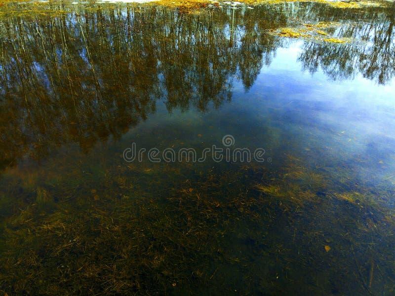 Η αντανάκλαση του δάσους στο νερό μιας δασικής λίμνης, στο κατώτατο σημείο της οποίας είναι ορατή πλημμυρισμένη χλόη και φεύγει στοκ φωτογραφία με δικαίωμα ελεύθερης χρήσης