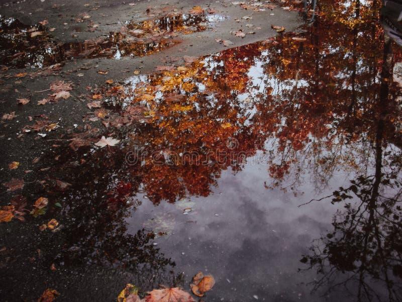 Η αντανάκλαση φθινοπώρου στο νερό που σκορπίζεται με πεσμένος βγάζει φύλλα στοκ εικόνα με δικαίωμα ελεύθερης χρήσης