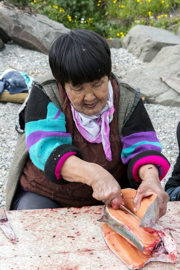 Η ανώτερη γυναίκα Chukchi προετοιμάζει το σολομό στοκ εικόνες με δικαίωμα ελεύθερης χρήσης