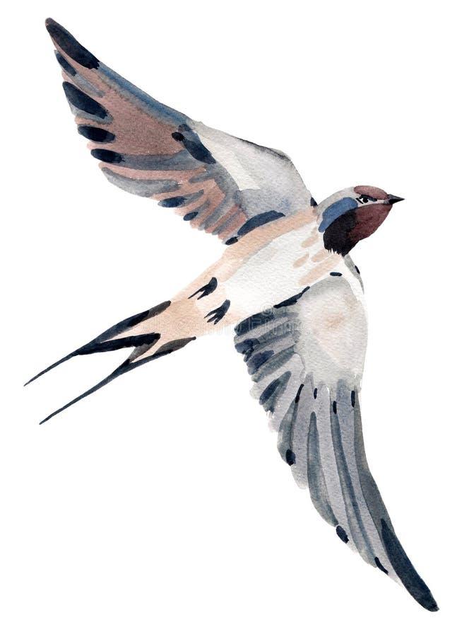 Η απεικόνιση Watercolor του πουλιού καταπίνει διανυσματική απεικόνιση