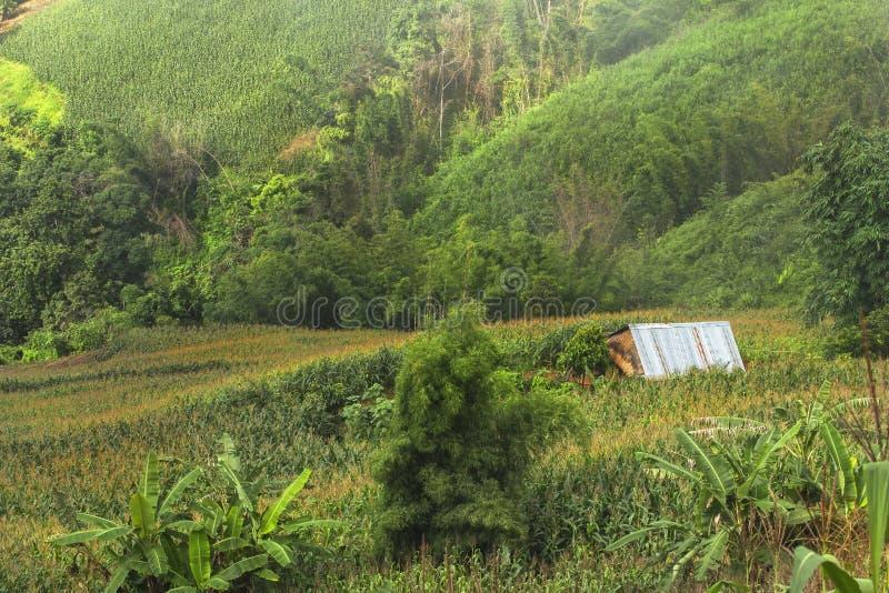 Η αποδάσωση για την καλλιέργεια της γεωργίας στο βουνό στοκ φωτογραφίες με δικαίωμα ελεύθερης χρήσης