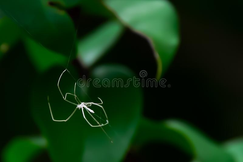 Η αράχνη θα το κόψει έξω όταν αυξάνεται το σώμα του στοκ εικόνες