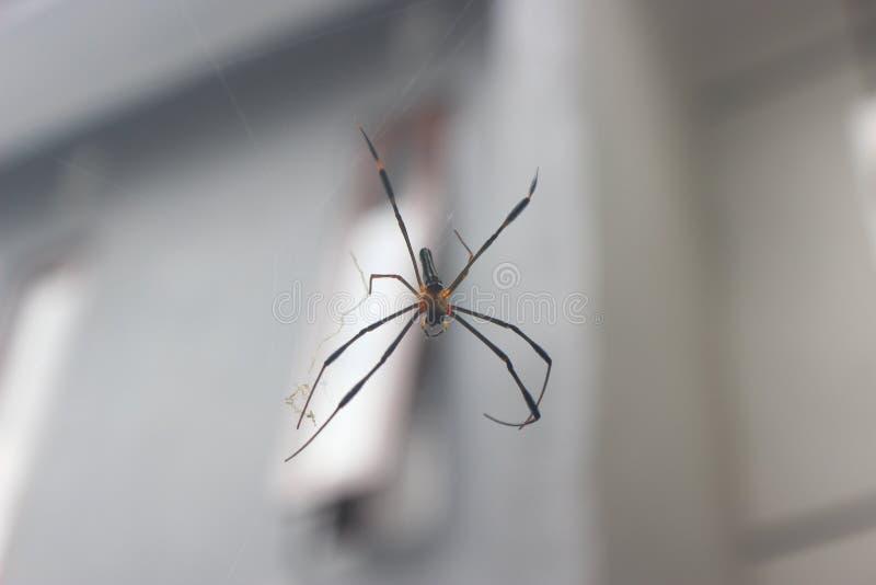 Η αράχνη στοκ εικόνες