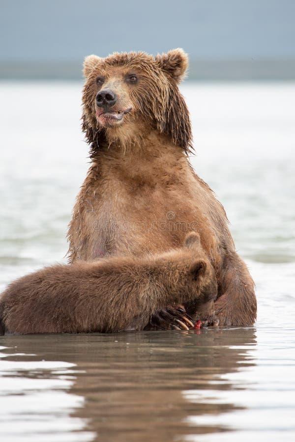 Η αρκούδα στέκεται στα οπίσθια πόδια της στοκ φωτογραφία με δικαίωμα ελεύθερης χρήσης
