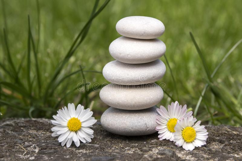 Η αρμονία και η ισορροπία, ο απλοί πύργος χαλικιών και η μαργαρίτα ανθίζουν στην άνθιση στη χλόη, απλότητα στοκ εικόνες