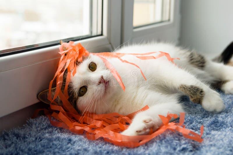 Η αστεία άσπρη τιγρέ γάτα παίζει με τις κορδέλλες πλησίον στο παράθυρο στοκ εικόνες