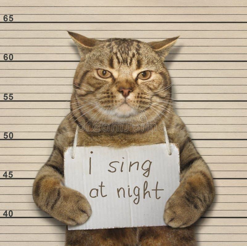 Η αστεία γάτα επιθυμεί να τραγουδήσει τη νύχτα στοκ φωτογραφία με δικαίωμα ελεύθερης χρήσης