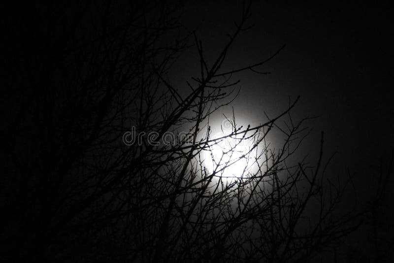 Η αστραπή φεγγαριών επάνω treetop στοκ εικόνα με δικαίωμα ελεύθερης χρήσης