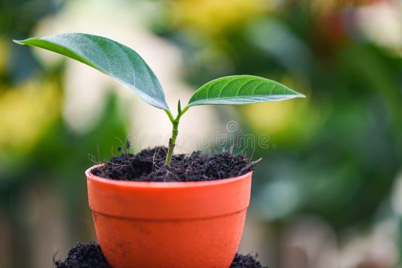 Η αυξανόμενη φύτευση εγκαταστάσεων ανθίζει στο δοχείο με το χώμα στο πράσινο υπόβαθρο κήπων φύσης στοκ φωτογραφίες με δικαίωμα ελεύθερης χρήσης