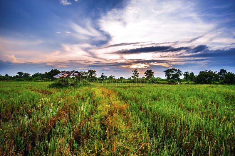 Η αυλή είναι ευρεία στην επαρχία στο ηλιοβασίλεμα στοκ εικόνες