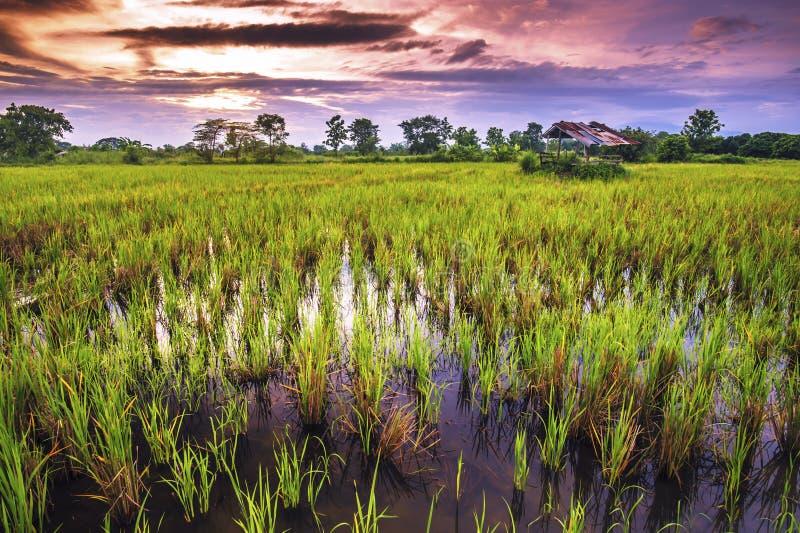 Η αυλή είναι ευρεία στην επαρχία στο ηλιοβασίλεμα στοκ εικόνα