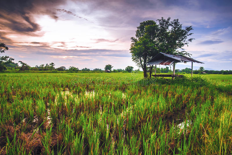 Η αυλή είναι ευρεία στην επαρχία στο ηλιοβασίλεμα στοκ εικόνες με δικαίωμα ελεύθερης χρήσης