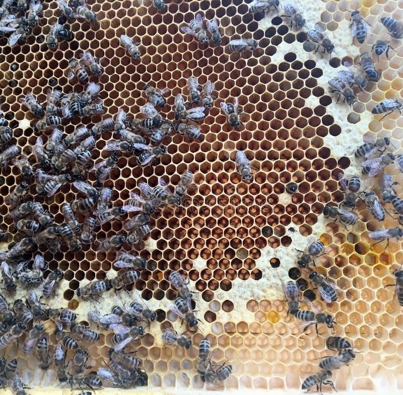 Η αφηρημένη hexagon δομή είναι κηρήθρα από την κυψέλη μελισσών που γεμίζουν με το χρυσό μέλι στοκ φωτογραφία με δικαίωμα ελεύθερης χρήσης