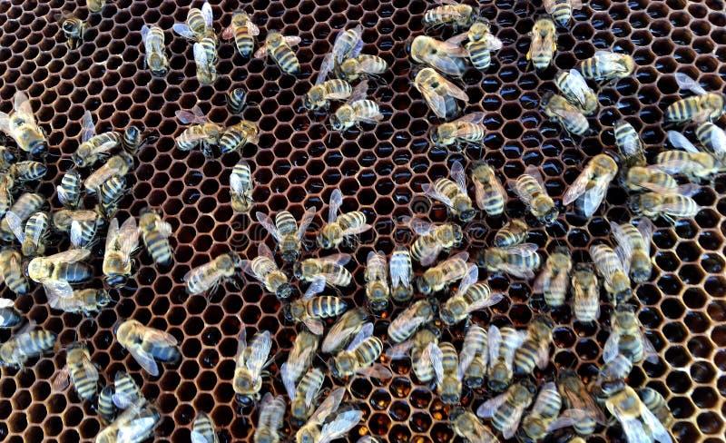 Η αφηρημένη hexagon δομή είναι κηρήθρα από την κυψέλη μελισσών που γεμίζουν με το χρυσό μέλι στοκ εικόνα με δικαίωμα ελεύθερης χρήσης