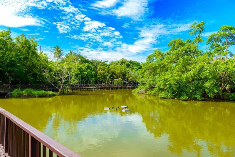 Η αφθονία δέντρων, μπλε ουρανών και λιμνών σε Sri Nakhon Khuea στοκ εικόνες