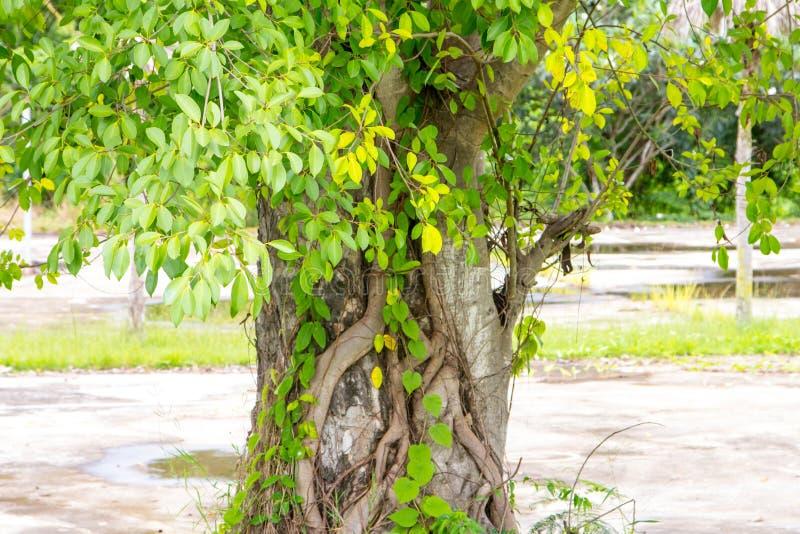 Η βάση του δέντρου στοκ φωτογραφίες