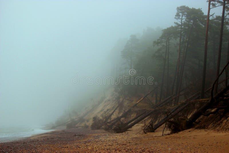 η βαλτική παραλία καλύπτει τη θάλασσα άμμου αντανάκλασης palanga ακτών υγρή στοκ φωτογραφίες