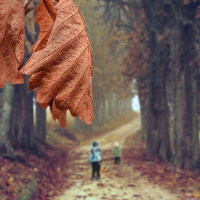 Η βελανιδιά διαφεύγει το φθινόπωρο στο φόντο του δασικού δρόμου όπου παιδιά παίζουν στοκ φωτογραφία με δικαίωμα ελεύθερης χρήσης