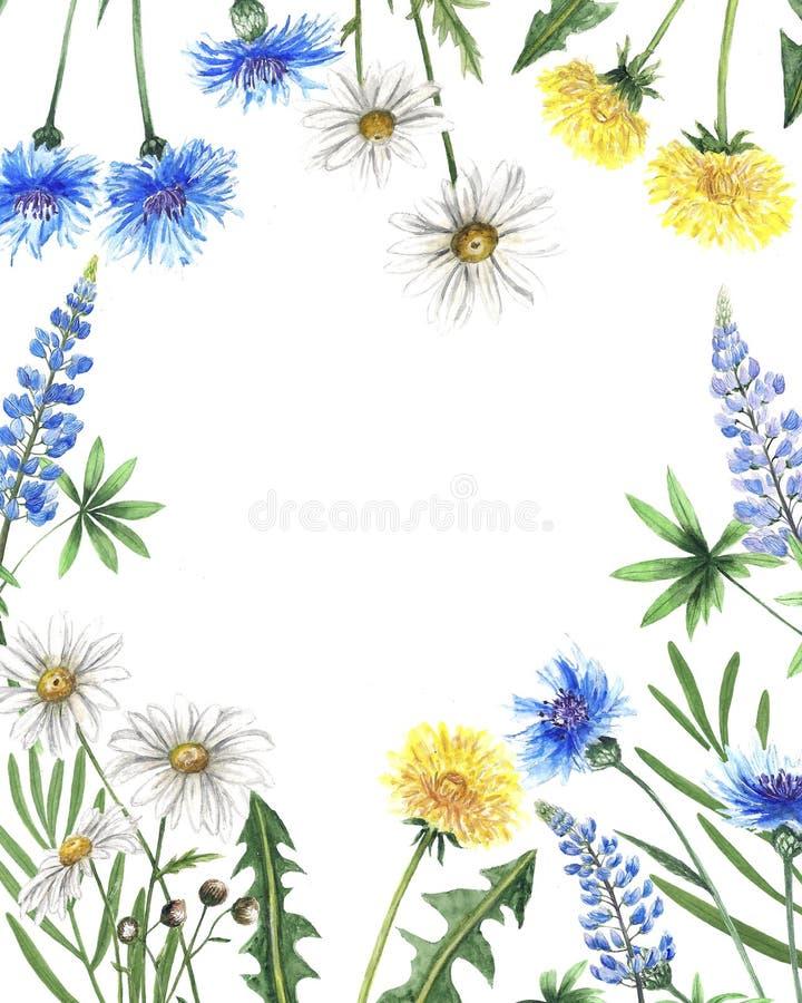 Η βοτανική απεικόνιση watercolor Wildflowers αφήνει το chamomile καλοκαίρι άνοιξης λούπινων πικραλίδων cornflower καθορισμένο για διανυσματική απεικόνιση