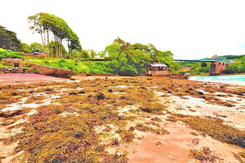 Η βόρεια Ουαλία Anglesey γεφυρών αναστολής Menai που αντιμετωπίζεται At Low Tide από μια σκορπισμένη φύκι παραλία στοκ εικόνα με δικαίωμα ελεύθερης χρήσης