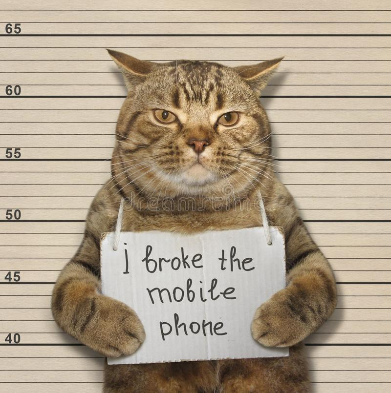 Η γάτα έσπασε το τηλέφωνο στοκ εικόνα με δικαίωμα ελεύθερης χρήσης