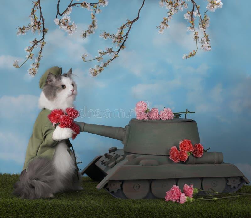Η γάτα έφερε τα λουλούδια στη δεξαμενή στοκ εικόνες με δικαίωμα ελεύθερης χρήσης
