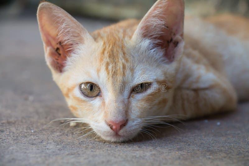 Η γάτα έχει τα μάτια είναι ίση στοκ εικόνες με δικαίωμα ελεύθερης χρήσης