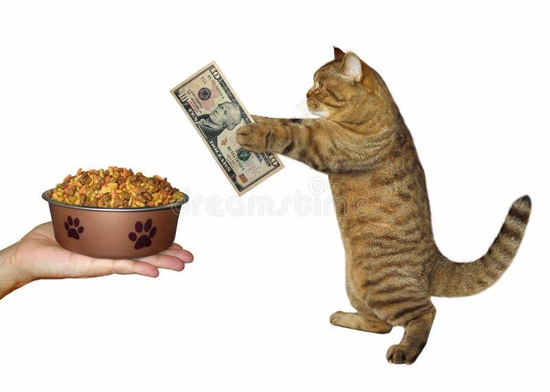 Η γάτα αγοράζει τα ξηρά τρόφιμα στοκ φωτογραφία με δικαίωμα ελεύθερης χρήσης