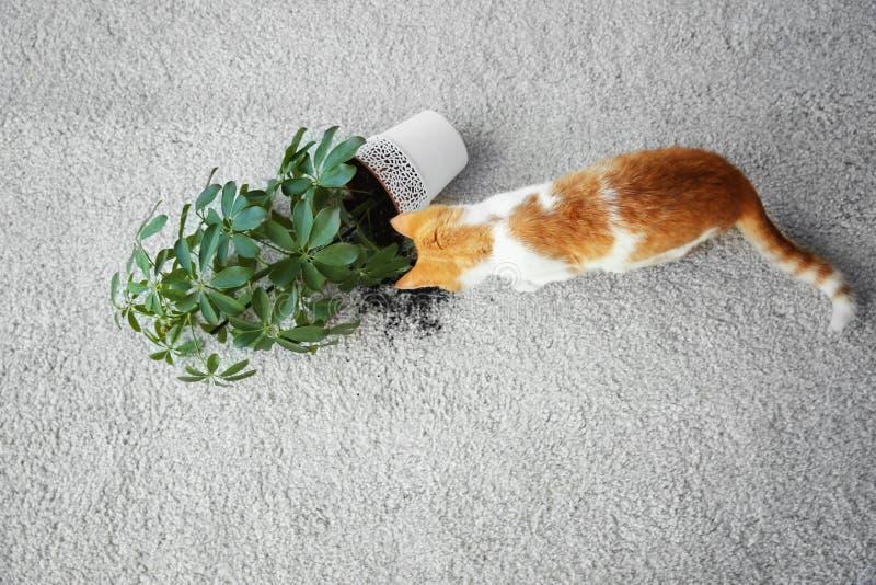 Η γάτα ανέτρεψε πλησίον τις εγκαταστάσεις σπιτιών στοκ φωτογραφίες με δικαίωμα ελεύθερης χρήσης