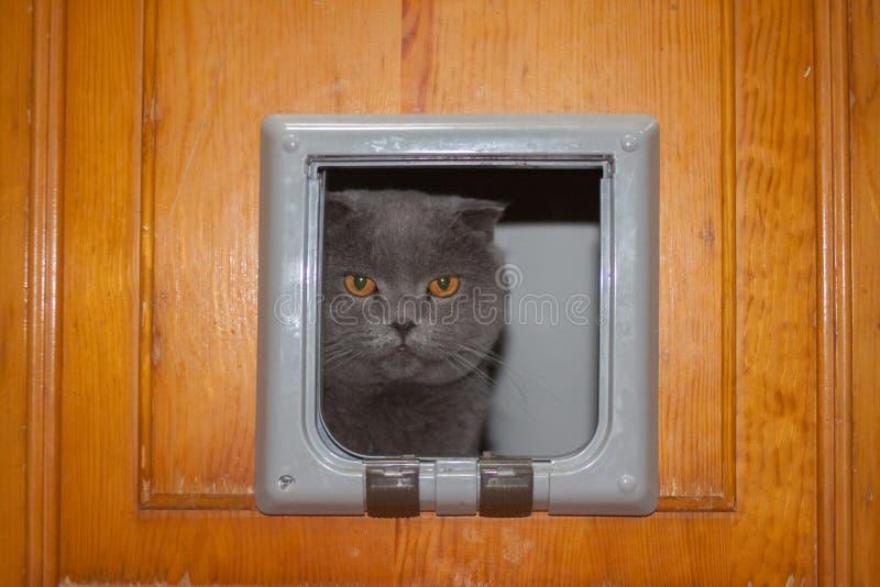 η γάτα αναρριχείται στην τρύπα στην πόρτα Boitansky στοκ εικόνα με δικαίωμα ελεύθερης χρήσης