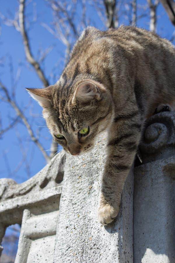 Η γάτα αναρριχείται στο φράκτη στοκ φωτογραφίες