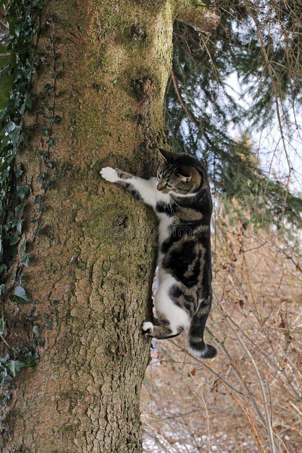 Η γάτα αναρριχείται στοκ φωτογραφία με δικαίωμα ελεύθερης χρήσης