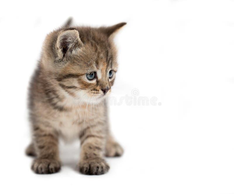 η γάτα απομόνωσε μικρό στοκ φωτογραφία
