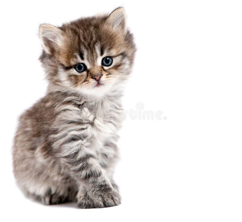 η γάτα απομόνωσε μικρό στοκ εικόνα
