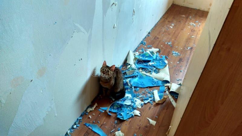 Η γάτα βοηθά να κάνει μια ανακαίνιση στοκ φωτογραφία